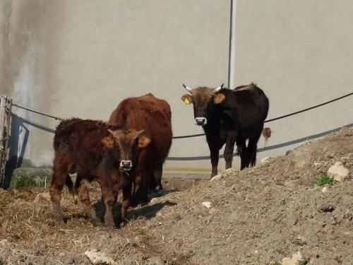Agriturismo Bachile Bertula Sardegna