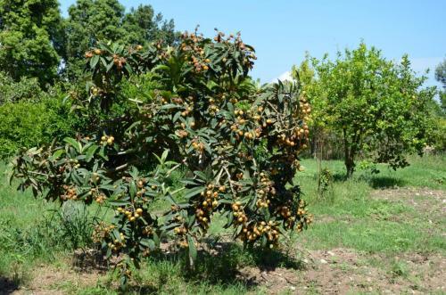 Agriturismo Bachile Bertula Sardegna (29)