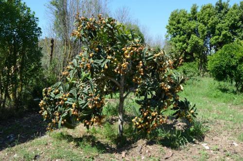 Agriturismo Bachile Bertula Sardegna (30)