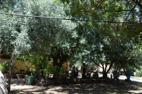 Agriturismo Bachile Bertula Sardegna (8)